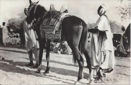 Zinder Le Cheval Du Sultan - Postcards