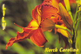 North Carolina Lily