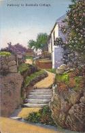 Cpa Bermudes, Bermuda, Pathway To Bermuda Cottage - Bermudes