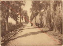 Planche Du Service Photographique De L´armée Belge WW1 Guerre Route Oude Cappelle à Dixmude - 1914-18