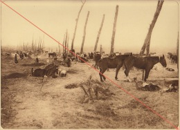 Planche Du Service Photographique De L´armée Belge WW1 Guerre Bivouac Près D' Ypres - 1914-18