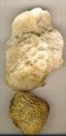 Corail Fossile  France Languedoc  Lot De 2  état Brut - Fossils