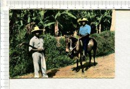 MARTINIQUE  -  Paysans  Martiniquais  -  Cheval - Martinique