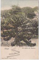 02072a Boma 1903 CP Le Caféier Du Sankuru V. Bruges  Nels Série 14 N°69 - Congo Belge