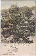 02072a Boma 1903 CP Le Caféier Du Sankuru V. Bruges  Nels Série 14 N°69 - Belgisch-Kongo