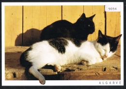 Portugal - Black Cat Chat Noir - Cats Chats - Chats