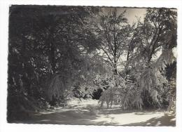 CPSM - MONT-VENTOUX (84) Forêt Sous La Neige - Francia