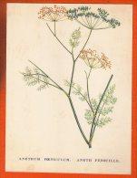 1 Image Pub 26 X 20 Cm  Transfusine  - N° 12 Anethum Feniculum - Publicités