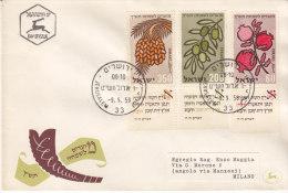 1959 Israel Jerusalem Fruits Dates Sharon Fruit Agriculture - Agriculture