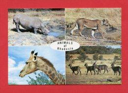 Rhodésie - Animals Of Rhodesia - White Rhinoceros - Lioness - Giraffe - Waterbuck Ram - Zimbabwe - Zimbabwe