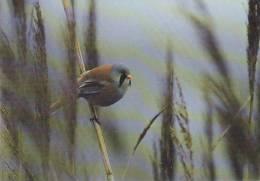 Carte Postale CP Oiseau - MESANGE A MOUSTACHES / Sempach - BEARDED TITMOUSE Bird Postcard -  MEISE Vogel Postkarte - 188 - Vogels