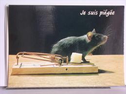 P. GARGUIL - JE SUIIS PIEGEE - SOURIS - FROMAGE - Illustrateurs & Photographes