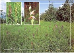 WASSELONNE 67 - Les Orchidées Sauvages Sur Le Goefberg - VM1005 - I-3 - Wasselonne