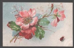 105858 GARDEN Flowers & BEETLE By C. KLEIN Vintage Russian PC - Klein, Catharina