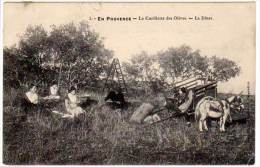 En Provence, La Cueillette Des Olives - Le Diner (asi-12846) (AG) - Agriculture