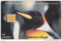 TAAF, TAF-19, Manchot Royal, Penguin, 2 Scans. - TAAF - Franse Zuidpoolgewesten