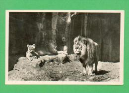 CPSM  ALLEMAGNE  -  HAMBURG  -  Carl Hagenbeck´s Tierpark - Löwenschlucht  ( En 1951 ) - Stellingen