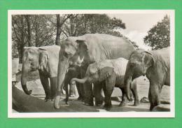 CPSM  ALLEMAGNE  -  HAMBURG  -  102/6  Carl Hagenbeck' Tierpark - Elefanten-Freianlage  ( Ann. 50 ) - Stellingen