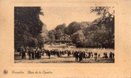 Bruxelles Bois De La Gambre - Cartes Postales