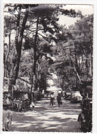 22146 Saint Georges Didonne - Avenue Beteille Et Camp Blayais Coll Mathieu STGdD - Saint-Georges-de-Didonne