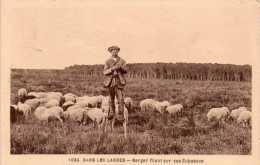 Cpa LANDES, Berger Filant Sa Laine Sur Ses échasses Parmi Ses Moutons   ( 30.40) - Aquitaine