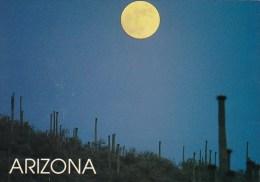 Arizona Tempe Moonlit Desert - Tempe
