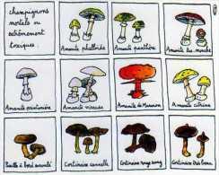Jean Vincent SENAC Deadly Mushrooms 1995, Champignons Toxiques - Other Illustrators