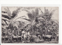 Costa Rica - Hauling Fruit To R.R. Track / Attelage, Transport De Bananes - Costa Rica