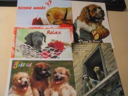 LOT DE 5 CARTES ...CHIENS DIVERS... - Cartes Postales