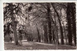 14 - GRAYE-sur-MER -  L´Aérium Départemental - Le Parc. CPSM  Edit. Artaud Pére Et Fils. - France