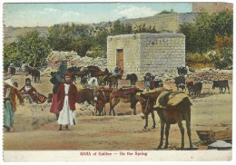 Palestina - GANA Of Galilee - On The Spring. - Palestina
