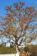 Florida - The Kapok Tree Inn - Clearwater