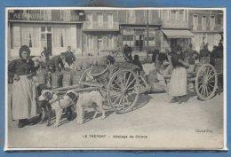 76 - Le TREPORT --  Attelage De Chiens - Le Treport