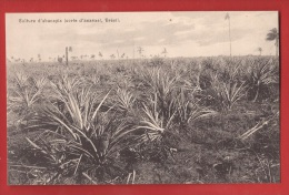 BBRA-30 Culture D'abacaxis Sorte D'ananas,    Zoller, Non Circulé - Unclassified