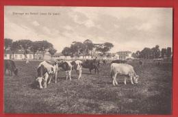 BBRA-34 Elevage De Vaches Race Du Pays   Zoller, Non Circulé - Unclassified