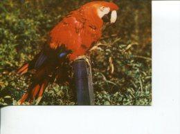 (331) Bird - Oiseau - Parrot - Vögel