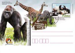 M POLAND - Postcard - 2012.01.31 Cp 1591 Zoo Animals In Polish (fur Seals, Zebra, Giraffe. Gorilla) - Interi Postali