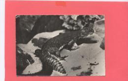 ANIMAUX :  LEZARD DES PALMIERS ( N°165 CP Publicité) - Sonstige