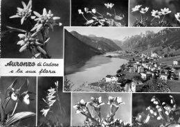 Auronzo Di Cadore E La Sua Flora. 8 Vedute - Italia