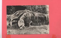 ANIMAUX :  FOURMILIER Ou TAMANOIR  ( N°131CP Publicité) - Sonstige