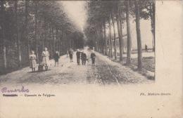 Beverlo   Chaussée Du Polygone            Scan 5917 - Beringen