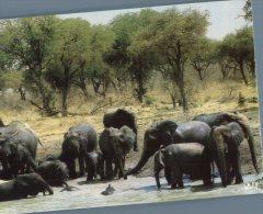 (725) Elephant - Tchad - Elephants