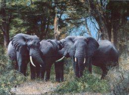 (725) Elephant - Rhodesia - Elephants