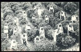 Cpa Sri Lanka Ceylon Ceylan  Tea Pluckers At Work    A3RK4 - Sri Lanka (Ceylon)