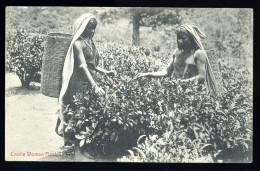 Cpa Sri Lanka Ceylon Ceylan Coolie Woman  Plucking Tea   A3RK4 - Sri Lanka (Ceylon)