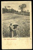 Cpa De Singapour Singapore Pine Apple Plantation   A3RK4 - Singapour