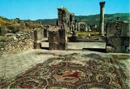MAROC : VOLUBILIS - Mosaïques Romaines - Autres