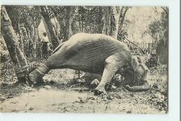 ASIE - CEYLAN -  Struggling Elephant - Eléphant Renversé Et Attaché - 2 Scans - Non Classés