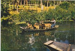 22227 Venise Verte (France 79) Transport De Chevres -65 HR 35 AS Barque Marais