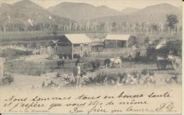 Australia Farm In The Mountains éditeur Kerry Sydney - Australie